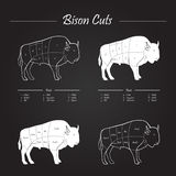 Bison Meat Cuts Scheme Illustrazione di Stock