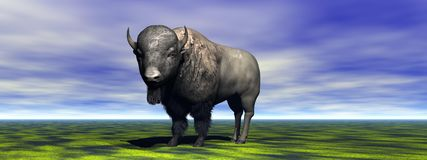 Bison Stock Photo