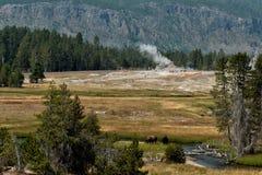 Bison på gammalt troget för Yellowstone Geyser royaltyfri foto