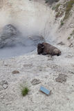 Bison på gyttjavulkan Arkivbild