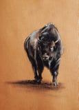 Bison pastel drawing Stock Photos
