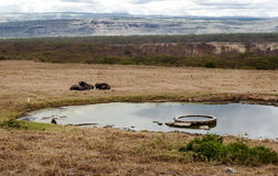 Bison resting. Next to a lake in the African savannah. It is a cloudy day stock images