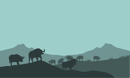 Bison silhouette in hills scenery Stock Photography
