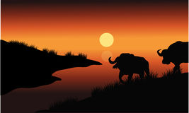 Bison silhouette in riverbank Stock Photography