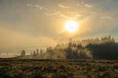 Bison Silhoutte på gryning fotografering för bildbyråer