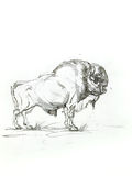 Bison sketch Stock Photo
