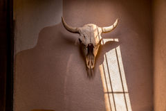 Bison skull on adobe wall Stock Image