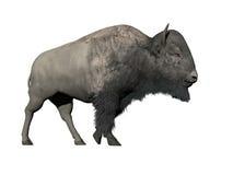 Bison som går - 3D framför Arkivfoton