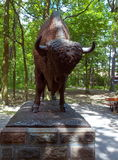 Bison from Spala. Royalty Free Stock Photos