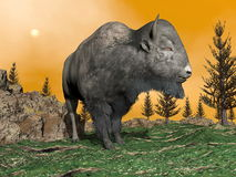 Bison by sunset - 3D render Royalty Free Stock Photo