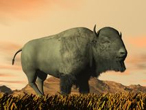Bison by sunset- 3D render Stock Image