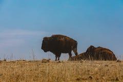 Dust Mound stock image