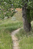Bison Trail Under Cottonwood Tree Royalty Free Stock Image