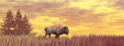 Bison walking ahead - 3D render Stock Photos