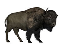 Bison walking - 3D  render Royalty Free Stock Image