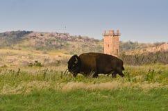 Bison Wichita Mountains, APROVAÇÃO imagem de stock royalty free