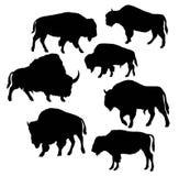Bison Wild Bull Silhouettes Fotografia Stock Libera da Diritti