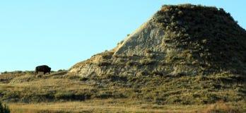 Bisonanseende på foten av ett berg Royaltyfri Bild