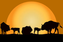 Bisons family at sunset Stock Images