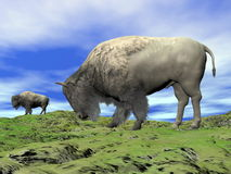 Bisons and grassland - 3D render Stock Images