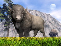 Bisons in the nature - 3D render Stock Photos