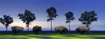 Bisons. And trees and sky blue Royalty Free Stock Photo