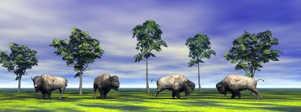 Bisons and trees. And sky blue and white Stock Photography