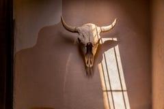 Bisonschädel auf Lehmziegelmauer Stockbild
