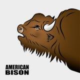 Bisonte americano Fotografia Stock