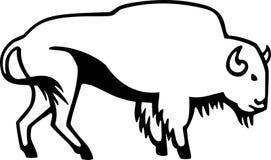 Bisonte americano Immagine Stock Libera da Diritti