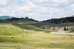 Bisonte americano en animales salvajes en los llanos abiertos de Yellowstone Foto de archivo libre de regalías
