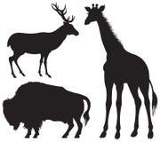 Bisonte, ciervos y jirafa, animal salvaje Foto de archivo libre de regalías