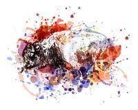 Bisonte da ilustração de cor do vetor Imagem de Stock