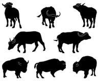 Bisonte e búfalo Imagens de Stock