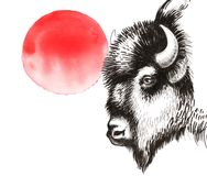 Bisonte e Sun rosso Fotografia Stock