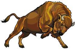Bisonte europeo libre illustration
