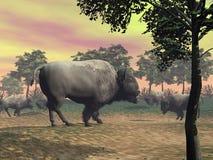 Bisontes na natureza - 3D rendem Imagem de Stock