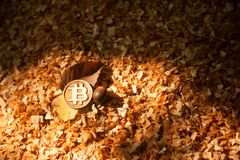 Bit coin on wood chips stock photo