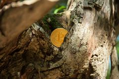 Bit coin in woods stock photos