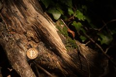 Bit coin in woods stock photography