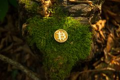 Bit coin in woods stock photo