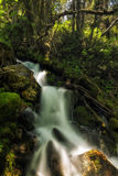 A Bit of Heaven. Slow motion waterfall running over moss in the Wasatch national forest in Utah USA Stock Photos