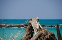 Bit of wood at Puako beach Stock Image