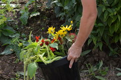 Bitande blommor för en bukett Arkivbilder