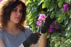 Bitande blommor för härlig trädgårdsmästarekvinna med sekatör Fotografering för Bildbyråer