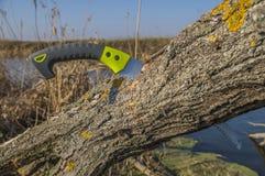 Bitande gammal trädfilial Beskära träd i trädgård vid en bågfil arkivfoto