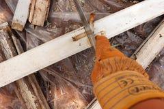 Bitande gammalt målat trä med handen såg in i stycken arkivbilder