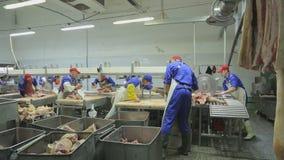 Bitande griskött på linje bärs ut av yrkesmässiga slaktare stock video
