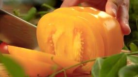 Bitande gul tomat arkivfilmer