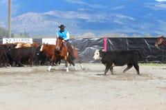 Bitande hästshow fotografering för bildbyråer